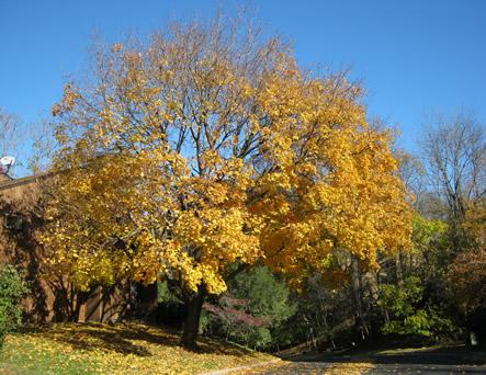 Fall 2010 016