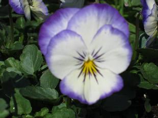 Spring 2012 035
