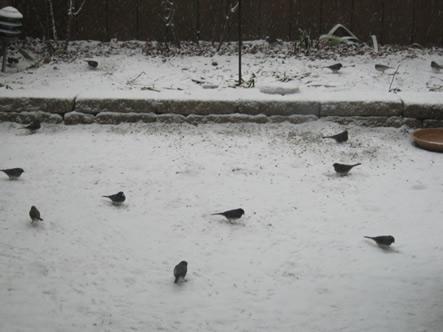 Patio snow birds