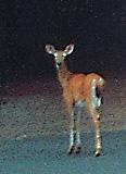 garden_09_deer