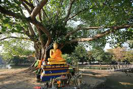 buddha_under_bodhi_tree-edit
