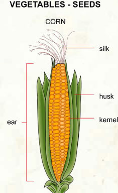 corn - silk