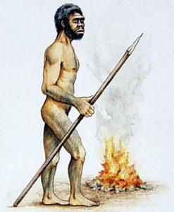 homo_erectus