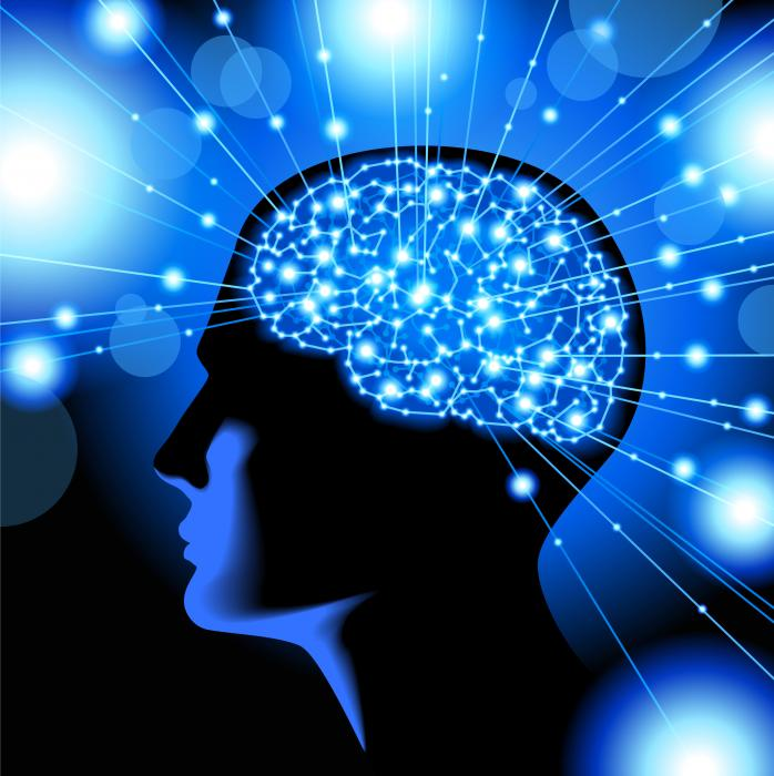 human_brain_two