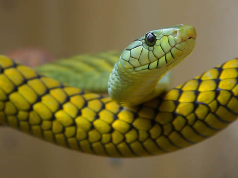 snake two