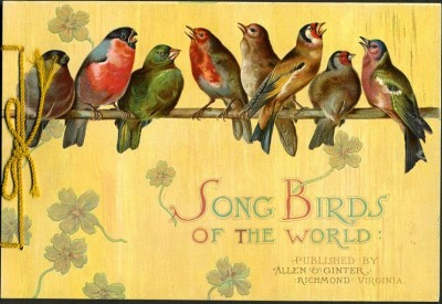 songbirds_of_the_world