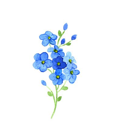 forget me not two