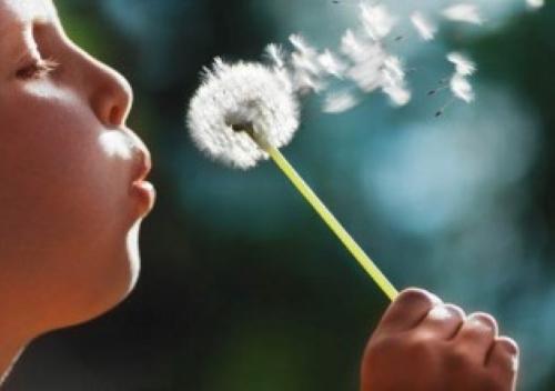 child-blowing-dandelion-500x352